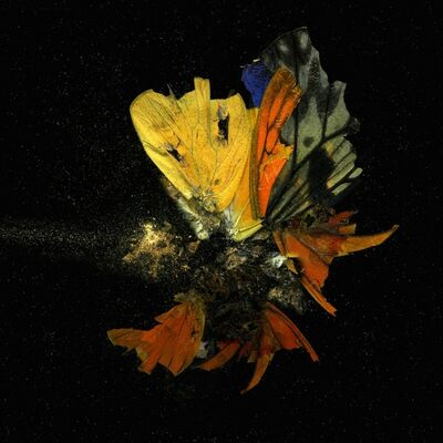 Mat Collishaw, 'Insecticides 13-18', 2010