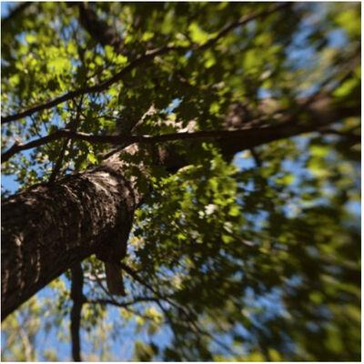 Caroline Savage, 'Tree Canopy 2', 2018