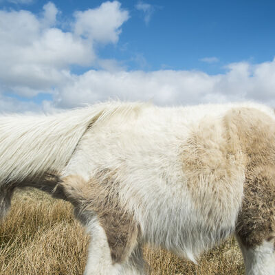 Cig Harvey, 'Dartmoor Pony and Sky, Devon, England', 2013