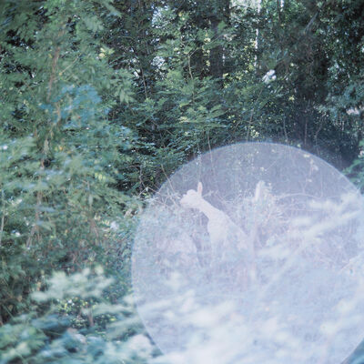 Rinko Kawauchi, 'Untitled, from the series 'the eyes, the ears'', 2005