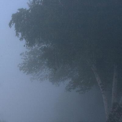 Francie Lyshak, 'Fog Tree', 2019