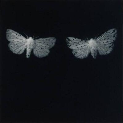 Sarah Gillespie, 'Ermine Moths', 2019
