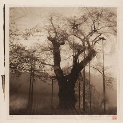 Toshio Enomoto, 'In the Icy Fog. Shokawa Cherry tree in Gifu Prefecture', 2016