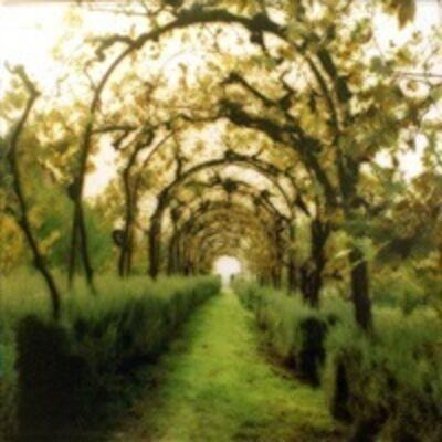 Lynn Geesaman, 'Certosa di Pontignano, Italy', 2000