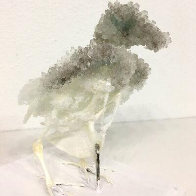 Tyler Thrasher, 'Crystallized Pigeon Skeleton', 2017