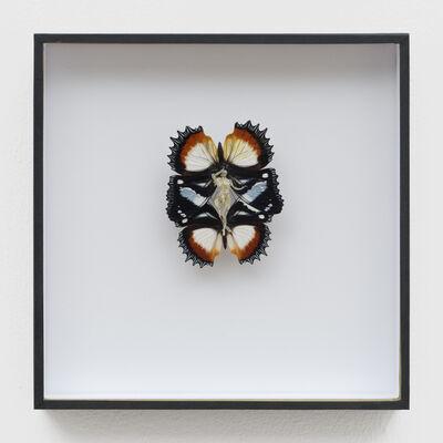 Lionel Sabatte, 'Papillon de rencontre du 11 mai 2020', 2020