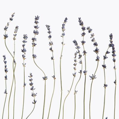 Inez & Vinoodh, 'Lavender', 2013