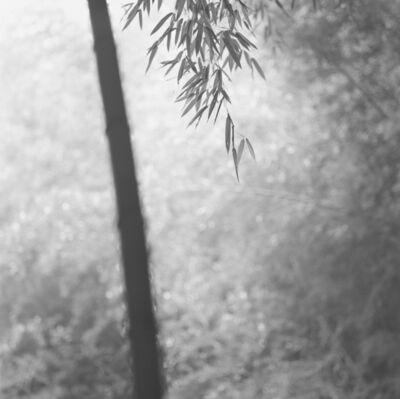 Choi Byung-Kwan, 'Bamboo Grey #8', ca. 2018