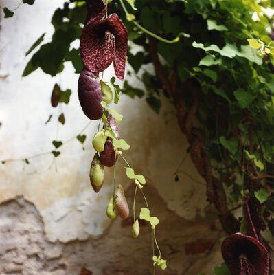 Dianne Bos, 'Padua Botanical #12', 2013
