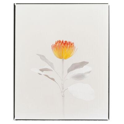 Clarrisse D'Arcimoles, 'Tinted Flowers 07', 2020