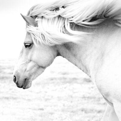 Anton Lyalin, 'Horses #8', 2001-2018