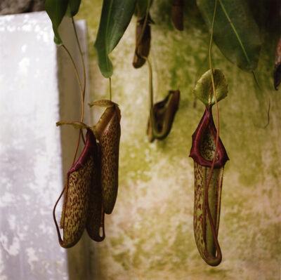 Dianne Bos, 'Padua Botanical #3', 2013