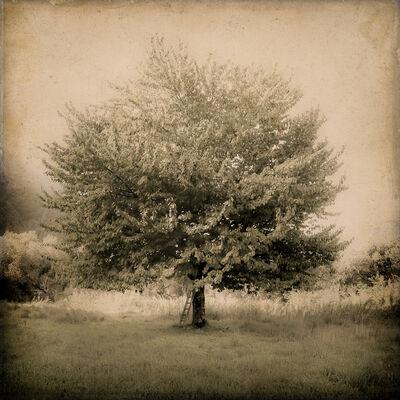 Kate Breakey, 'Cherry Tree with Ladder, Tuscany, Italy'
