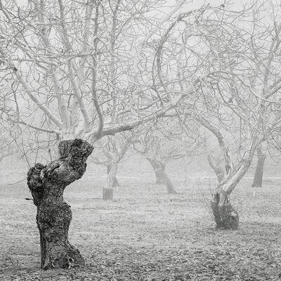 David Paul Bayles, 'Orchard for Arlo 62', 2019