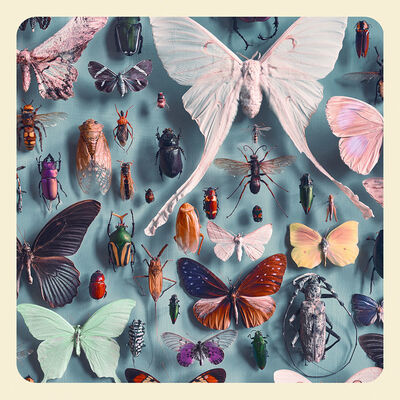 Jim Naughten, 'The Insects', 2017
