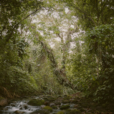 Mona Kuhn, 'Virgin Forest', 2009