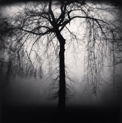 Michael Kenna, 'Wilshire Park Tree, Portland, Oregon', 2004