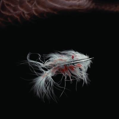 Patrick Beaulieu, 'for intérieur - sang 3', 2012