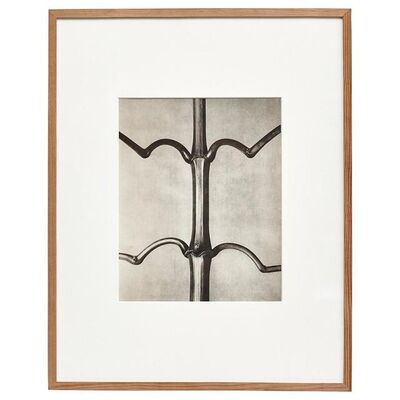 Karl Blossfeldt, 'Karl Blossfeldt Black White Flower Photogravure Botanic Photography', 1942