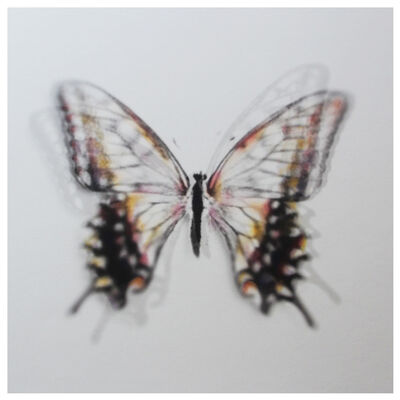 Stefania Ricci, 'Butterfly Brux 01', 2016