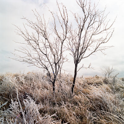 Allison V. Smith, 'Frozen 2. February 2014. Albany, Texas', 2014