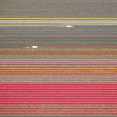 David Burdeny, 'VELD 15, Noordoostpolder, Flevoland, The Netherlands', 2016