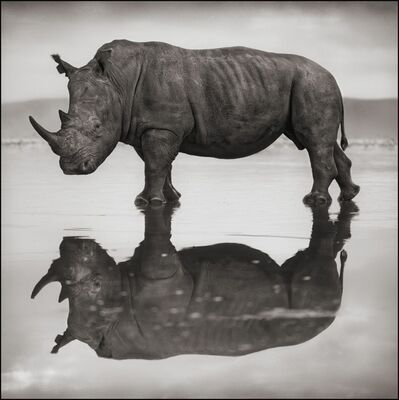Nick Brandt, 'Rhino on Lake, Nakuru 2007', 2007