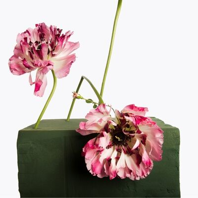 Inez & Vinoodh, '2 Two Tone Peonies, 1 Pink Miniature Rose', 2013