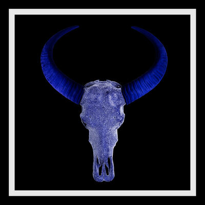 Angela Morris-Winmill, 'All Indigo Diamond Dust Buffalo Skull on Black Paper', 2019