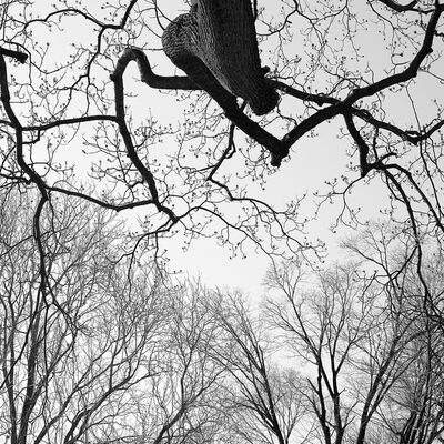 Paul Rider, 'Organic Lines 11', 2011