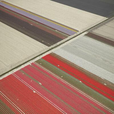 David Burdeny, 'Veld 23, Noordoostpolder, The Netherlands', 2016
