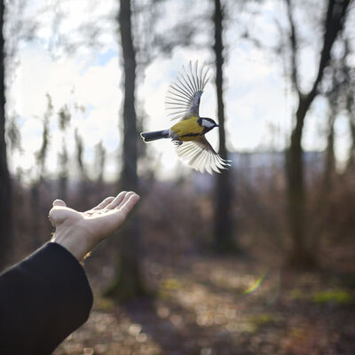 Cig Harvey, 'The Goldfinch, St. Petersburg, Russia', 2014