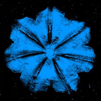 Rubem Robierb, 'Power Flower N - 4 (Turquoise on Black)', 2016