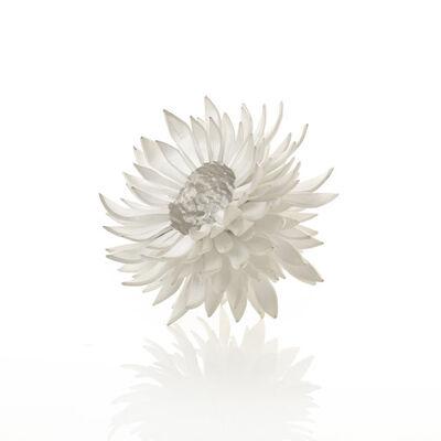 Junko Mori, 'A Silver Organism; Nigella', 2014