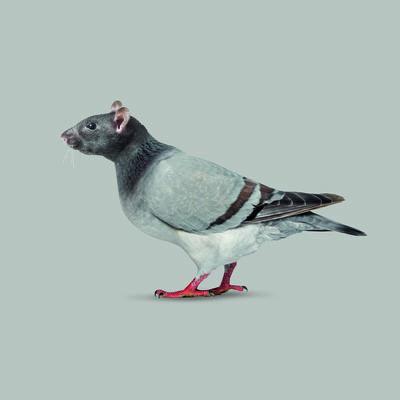 JM Navarro, 'Flying Rat', 2017