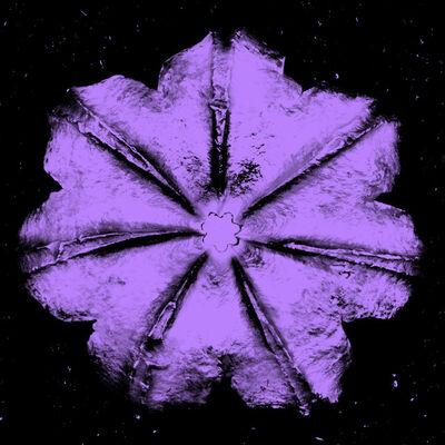 Rubem Robierb, 'Power Flower N-4 (Purple on Black)', 2016