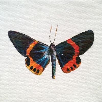 Augustina Droze, 'Moth', 2016