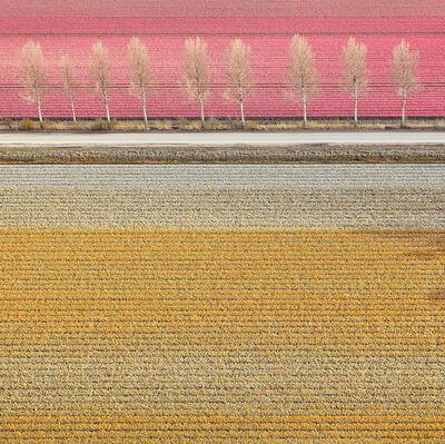 David Burdeny, 'Tulips (Veld) 02, Noordoostpolder, Netherlands', 2016
