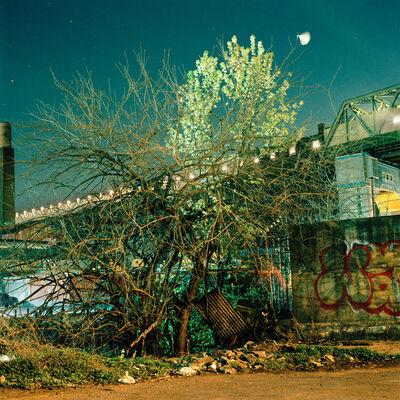 Miska Draskoczy, 'Spring Tangle', 2013