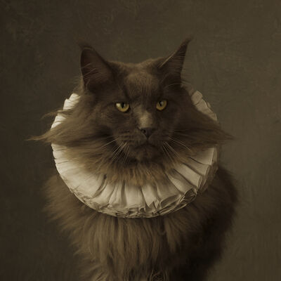 Marie Cecile Thijs, 'Cat with White Collar V', 2014