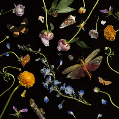 Paulette Tavormina, 'Botanical II, Ranunculus and Delphiniums', 2013