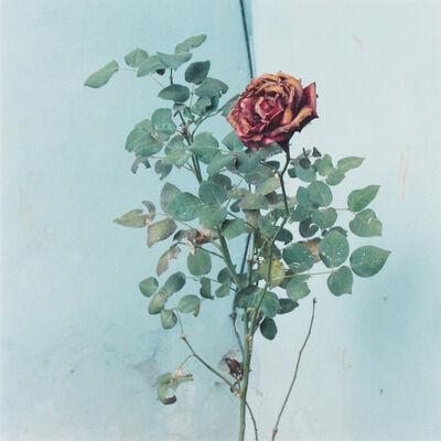 Amy Blakemore, 'Rose', 2013