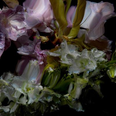 Alexander James Hamilton, 'Floral Study [0498]', 2012