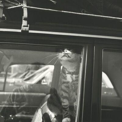 Vivian Maier, 'Self-portrait, Chicago area, August', printed later