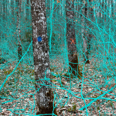Helen Sear, 'Becoming Forest No. 7', 2017