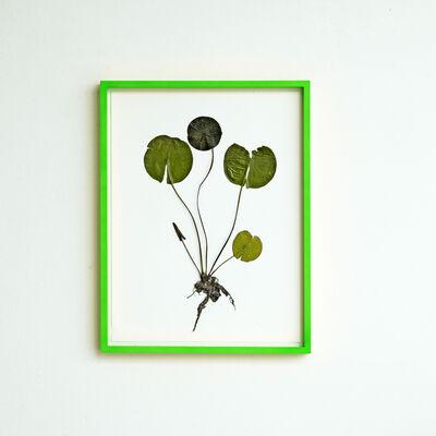 Olafur Eliasson, 'Herbarium ', 2021