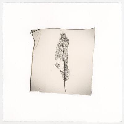 Vanessa Cowling, 'Leaf (Veins)', 2019