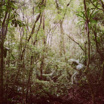Mona Kuhn, 'Araponga Jungle', 2009