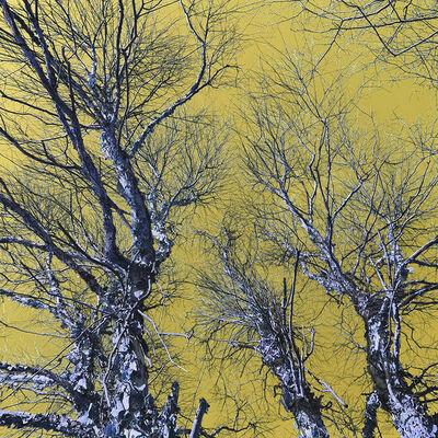 Monique Allain, 'Liminal Tree 1', 2020