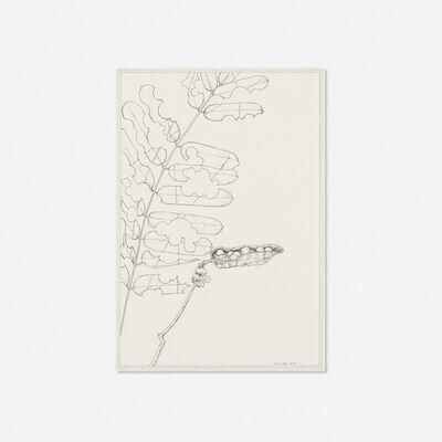 Ernesto Caivano, 'Floral Veins and Conduits: 082', 2006